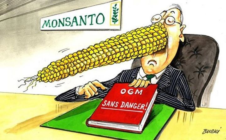 OGM dans les oeufs