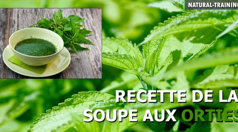 soupe aux orties