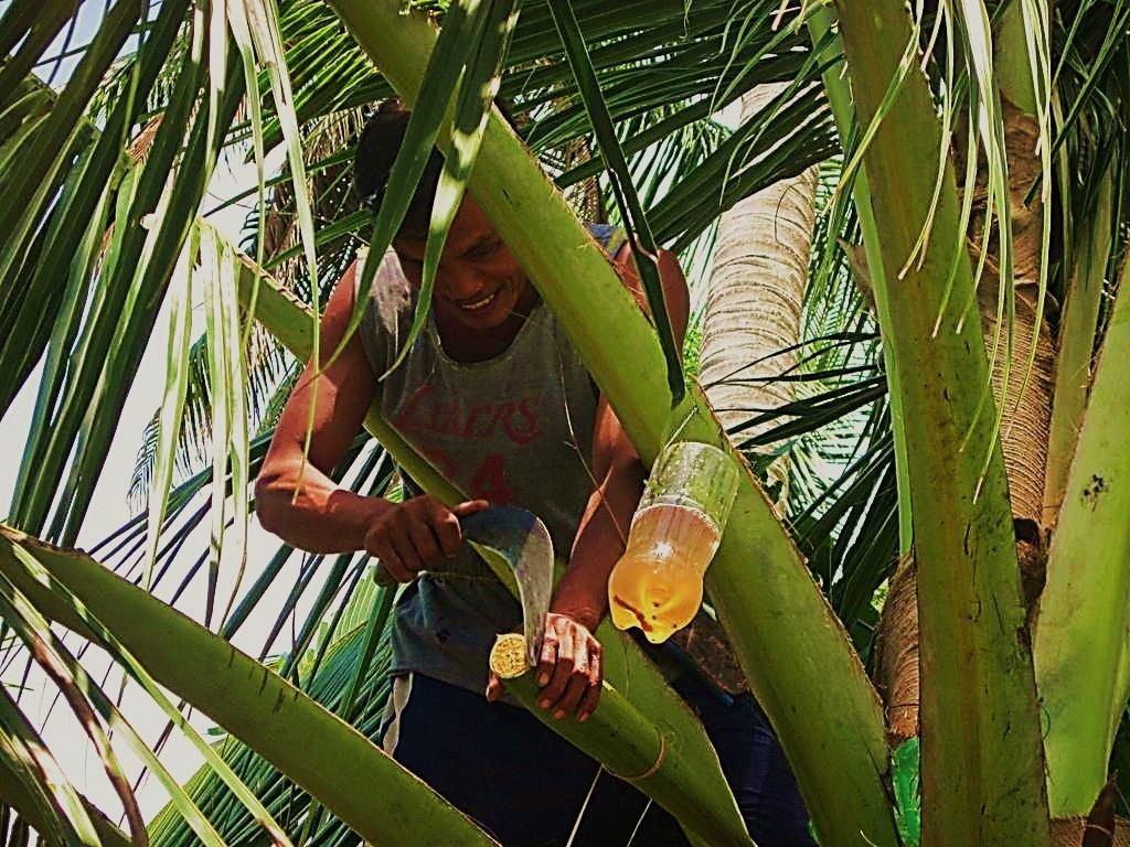 Fabrication du sucre de coco