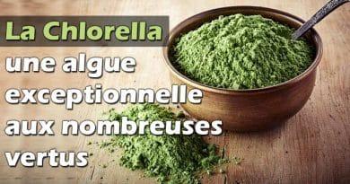 La chlorella une algue exceptionnelle aux nombreuses vertus